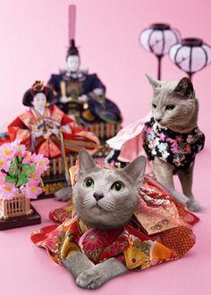 Japanese Hina Dolls and Hina Cats|雛人形と雛ねこ