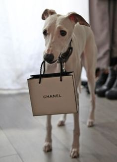this doggy knows how to shop