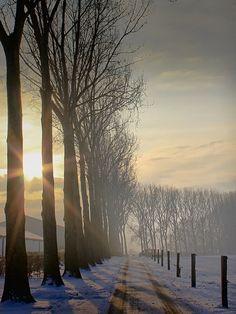Winter landscape: sun, misty ~ Photo by. Winter Szenen, I Love Winter, Winter Sunset, Winter Light, Winter Trees, Winter White, Snow Scenes, Winter Beauty, Winter Landscape