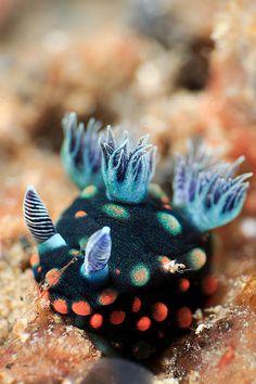 ~Along the Reef~ Underwater Creatures, Ocean Creatures, Beautiful Sea Creatures, Animals Beautiful, Rare Animals, Animals And Pets, Sea Snail, Sea Slug, Sea Dragon