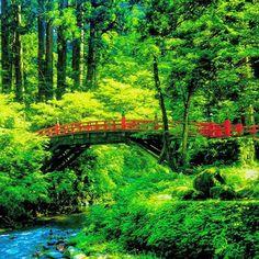 【toa417】さんのInstagramをピンしています。 《山形県。出羽三山神社part4。 森の中の参道の赤い橋。 #羽黒山 #国宝 #赤い橋 #橋 #日本 #山形 #出羽三山 #出羽三山神社 #神社 #神社仏閣 #登る #石段 #パワースポット #修行 #森 #木 #木々 #自然 #写真 #撮影 #足がガクガク#神秘的な雰囲気 #神々 #オーラ #フォト #japan #yamagata #dewasanzan #jinja #photographer》
