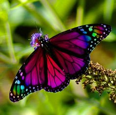 morpho blue butterfly tattoo ideas pinterest schmetterlinge sch ne schmetterlinge und. Black Bedroom Furniture Sets. Home Design Ideas