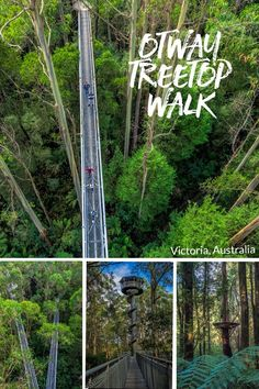 Otway Treetop Walk and the Otway Fly Zipline is in the Great Ocean Road region, Victoria, Australia via @2aussietravellers