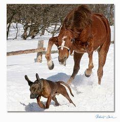 Imagenes de caballos - Fotografias equinas: Simpatica imagen de perro y caballo jugando  [24-3...