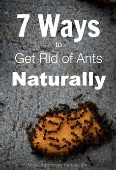get rid of ants naturally I've tried natural pest control approaches before: Some have worked, some didn't. This list explains what's really effective based on several quality resources, including university entomology departments. Get Rid Of Ants, Rid Ants, Bug Control, Diy Pest Control, Mice Control, Insect Repellent, Garden Pests, Garden Insects, Cleaning Tips