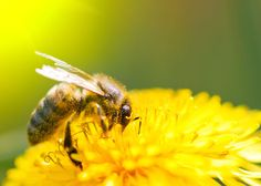 Tell the EPA to Immediately Suspend Clothianidin: The Pesticide That's Killing Bees - Nature & Community - MOTHER EARTH NEWS