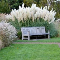 Plant Grasses Now for a Dramatic Garden Ornamental grasses are dramatic additions to your landscape and are easy to grow. Pick up tips for planting ornamental grasses. Farmhouse Landscaping, Landscaping Plants, Front Yard Landscaping, Landscaping Ideas, Arborvitae Landscaping, Landscaping Equipment, Hydrangea Landscaping, Luxury Landscaping, Patio Plants