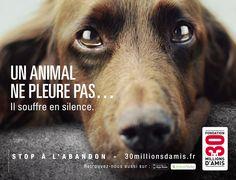 Campagne contre l'abandon 2012. Un animal ne pleure pas... Il souffre en silence.