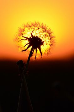 So this was taken a bit south of the Twin Cities...it's too good not too share!    Dandelion Sunset by djsime, via Flickr