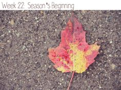 Beginning of fall photo project-love it!