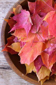 Happy 1st Day of Autumn!!! <3 ~2012~