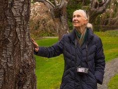 """Jane Goodall: Die Menschheit ist am Ende, wenn sie sich nach Covid-19 nicht umstellen kann …"""" Jane Goodall, Schneider, Winter Jackets, Profile, Photo And Video, Instagram, Fashion, Business, Finance"""