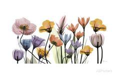 Flowerscape Portrait Kunst von Albert Koetsier bei AllPosters.de