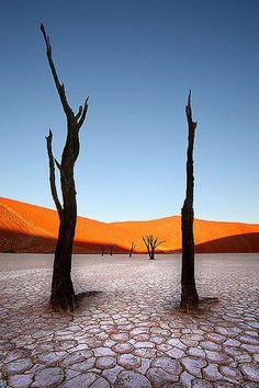 デッドフレイ(Deadvlei)や世界各地の旅行・観光の絶景画像 旅行・観光のおすすめ「wondertrip」
