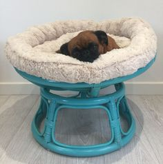 Mini #Papasan chair for pets...its a #Petasan This is our popular mini version of the iconic papasan chair designed for when your pet needs somewhere to curl up at the end of a busy day. It is exactly the same as our papasan chairs just smaller, its strong, durable and super soft and comfortable for your pet to relax in. Papasan Cushion, Papasan Chair, Painting Wicker Furniture, Furniture Sets, Navy Blue Accent Chair, Painted Wicker, Replacement Cushions, Garden Chairs, Chair Design