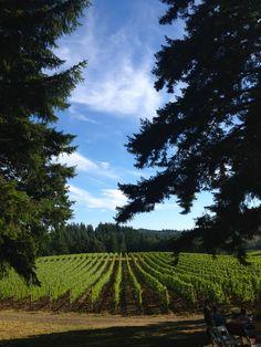 Ribbon Ridge Vineyard [Newberg, Oregon] Wonderful Places, Beautiful Places, Newberg Oregon, Places Ive Been, Places To Go, Oregon Travel, Gardening Gloves, My Town, Future Travel