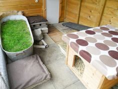 Add lots of different areas in your rabbits home as they love to investigate. Visit our blog to find more ideas.