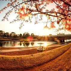 【jordansk8】さんのInstagramをピンしています。 《Break time🌇🌸 今日が誕生日でして、Fisheyeレンズ買ったので早速。 地元に河津桜が咲いてたので夕日と一緒に撮ってきました📸》