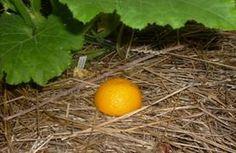 slug remedy for the garden