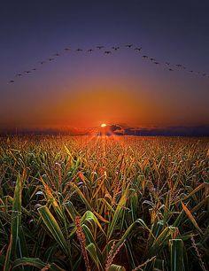 Harvest Migration Print By Phil Koch