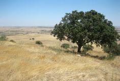 Ourique Landscape in Alentejo.