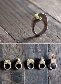 Wood and moss rings - etsy- http://www.etsy.com/shop/MrLentz/