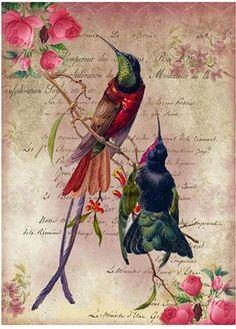 Decoupage Art, Decoupage Vintage, Vintage Paper, Vintage Art, Domino Art, Vintage Postcards, Vintage Images, Printable Scrapbook Paper, Hummingbirds