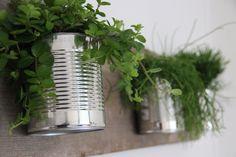 Cans with plants hanging on floor boards - Conserven blik gevuld met planten en opgehangen aan oude vloerplanken