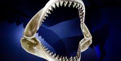 If Sharknado Happens In Asia