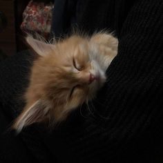 Pretty Cats, Cute Cats, Baby Cats, Cats And Kittens, Gato Gif, Cat Aesthetic, Cute Baby Animals, Neko, Cute Babies
