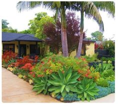 43 Best Southern California Friendly Gardens Images