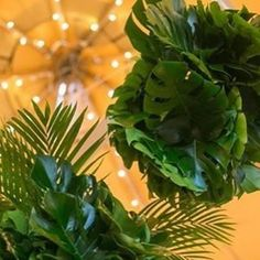 We are completely obsessed with the fact that is the for A stunning way to incorporate it into your tipi event styling is with lush tropical chandeliers like these by . Tropical Chandeliers, Event Tent Rental, Color Of The Year, Event Styling, Corporate Events, Pantone, Lush, Greenery, Plants
