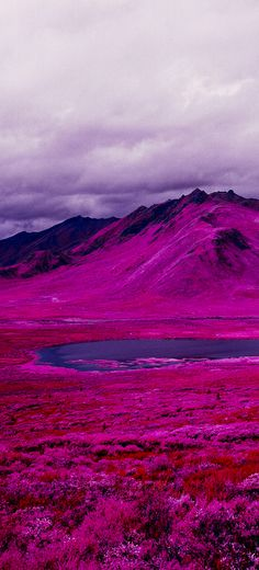 Infrared Film Turns The Arctic Hot Pink