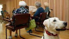 Beneficios de las terapias con perros