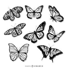 Set of butterfly illustrations in black. Isolated designs over white. Set includes 8 different butterfly species. White Butterfly Tattoo, Butterfly Drawing, Butterfly Tattoo Designs, Tattoo Designs Men, Vintage Butterfly Tattoo, Realistic Butterfly Tattoo, Butterfly Tattoos Images, Butterfly Black And White, Butterfly Stencil
