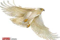 3D Animated GIF Glitter Graphics Birds   Orkut Scraps   Myspace Comments   Glitters   Graphics   Picture ...