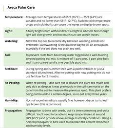 Areca Palm Care