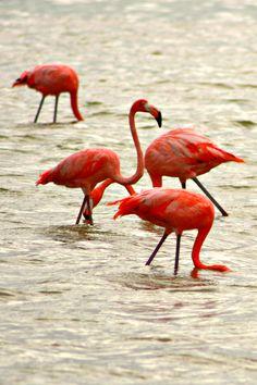 Flamingos    Nature's Paintbox