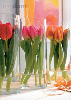 Tulips surrounded by cylindrical vase but not drowned in water...Simple beauty.