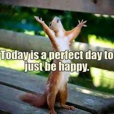 Today is a perfect day to just be happy. Funny Good Morning Quotes, Funny Quotes, Funny Memes, Life Quotes, Memes Humor, Cute Funny Animals, Funny Animal Pictures, Funny Squirrel Pictures, Just Be Happy