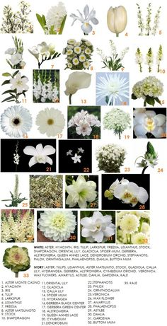 The choice of white flowers range from the whimsical Daisy to the exotic Orchid with everything in between.