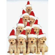 233 best christmas puppies images on pinterest merry christmas
