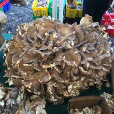 Maitake Mushroom: According to the American Cancer Society ...