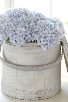 Beautiful hydrangeas! Wish we had the proper climate to grow these!