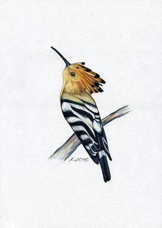 Hoopoe, Birds, Watercolor Original Painting Art, Quick sketch  #Realism   Natalia Komisarova    NatalieStorePainting      You can also find me on:    EBAY: http://stores.ebay.com/NatalieStorePainting    ETSY: https://www.etsy.com/shop/NatalieStorePainting    FACEBOOK: https://www.facebook.com/komisarova.art    #NataliePaintings #NatalieStorePainting #Natalie #Artist #Birds #Watercolor