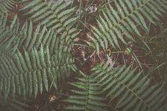 #лес #лето #фотография #фото  #красота Plant Leaves, Plants, Plant, Planets