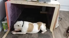 How I Turned My Detached Garage Into A Dog House & Dog Room #dogs #pets #dog #cute #animals #puppy