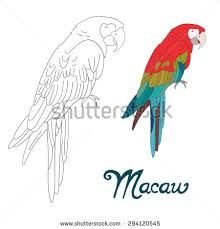hyacinth macaw coloring page coloring pages pinterest bird