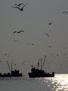 Shrimp Boats out trawling