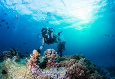 Why not become a qualified scuba diver on your year out? Check out our top 5 places to do it! | www.frontiergap.com | #explore #dive #sports #travel #adventure #marine #sea #sharks